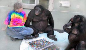 bonobos_kanzi_and_panbanisha_with_sue_savage-rumbaugh