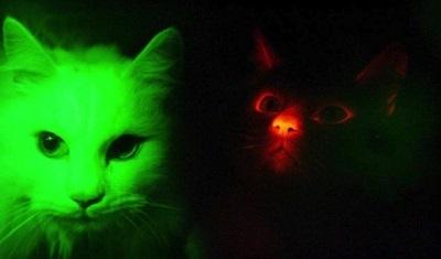 Светящиеся домашние питомцы - коты и кошки